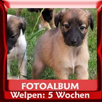 Zum Fotoalbum Welpenimpressionen 5 Wochen