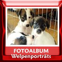 Welpenporträts und Gruppenfotos