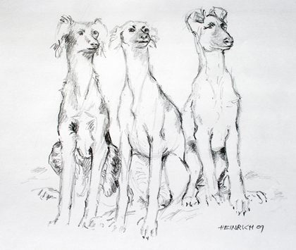 3 Whippets